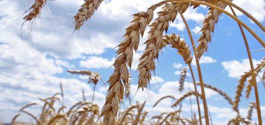 Киргизы не знают, куда девать урожай