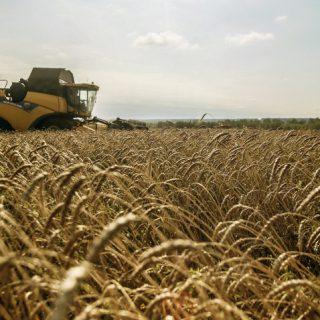 Минсельхоз решил отменить пошлину на пшеницу
