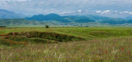 Казахстан может продлить мораторий на аренду земли иностранцами