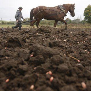 В скупке черноземов Украины заинтересованы американские компании