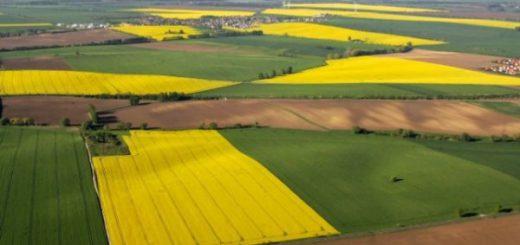 Рентабельность украинской аграрной продукции снизилась на 8,3%