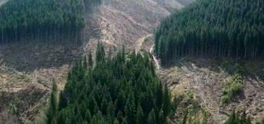 Украина откажется от моратория на экспорт необработанной древесины в страны ЕС