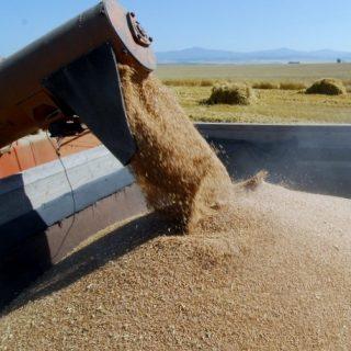 Китайцы собираются опрокинуть мировой рынок зерна за счет земель Казахстана.