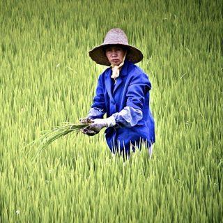 Аграрная политика Китая