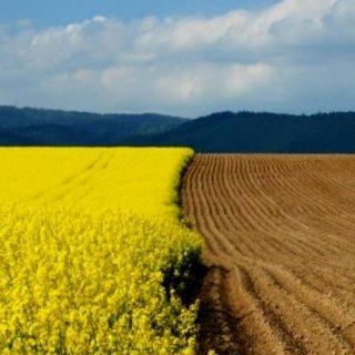 рынок сельхозземель на Украине