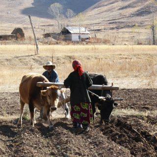 Бедность в Центральной Азии
