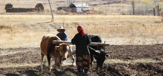 Об изменении положения дел с продовольственной безопасностью в Европе и Центральной Азии