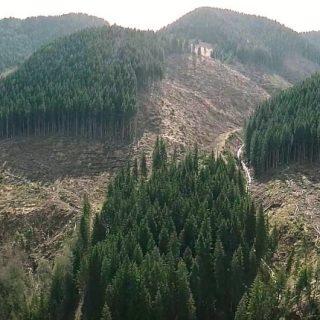 Вырубка леса в Закарпатье
